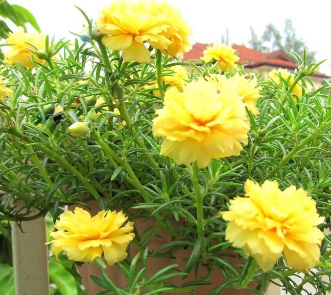 Hoa Sam – Hoa đẹp