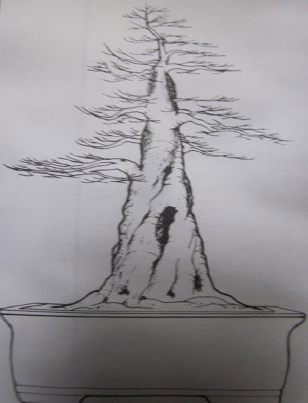 cay-bonsai-dang-truc-2a