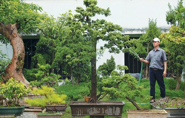 cay-bonsai-dang-truc-5a