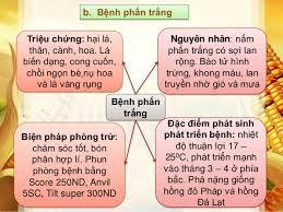 benh-phan-trang-5