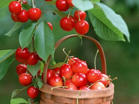 cay-cherry-5
