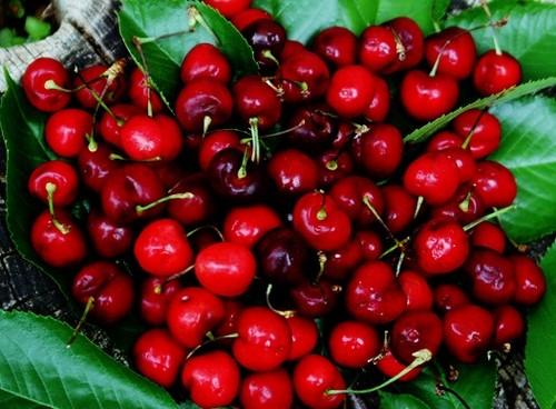 cay-cherry-6