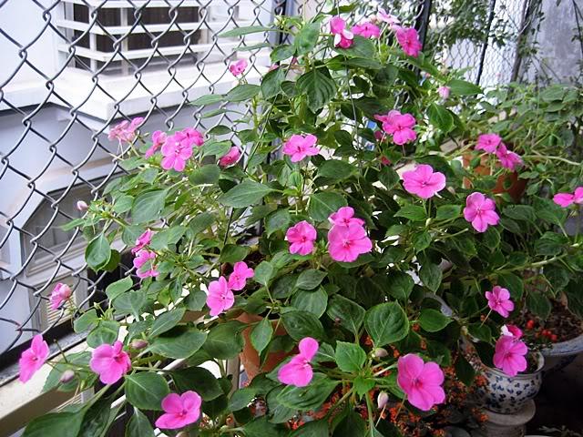 Từ khóa tìm kiếm: hoa ngọc thảo kép xoắn hoa ngọc thảo đơn hoa ngọc thảo kép hoa ngọc thảo trồng mùa nào trồng hoa ngọc thảo hạt hoa ngọc thảo cách trồng hoa ngọc thảo chăm sóc hoa ngọc thảo cách trồng cây hoa ngọc thảo nhân giống hoa ngọc thảo hạt hoa ngọc thảo kép trồng hoa ngọc thảo kép kỹ thuật trồng hoa ngọc thảo ý nghĩa hoa ngọc thảo hoa ngọc thảo xoắn kép