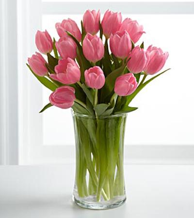 hoa-tulip-11