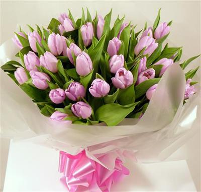 hoa-tulip-12