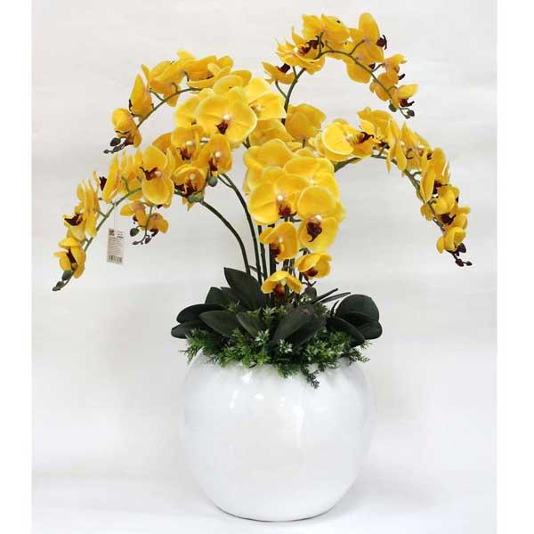 Ý nghĩa màu sắc của hoa lan hồ điệp