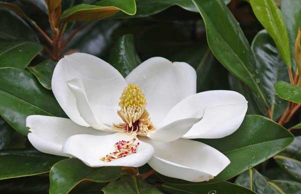 Hoa sen đất hoa của các cảnh quan linh thiêng