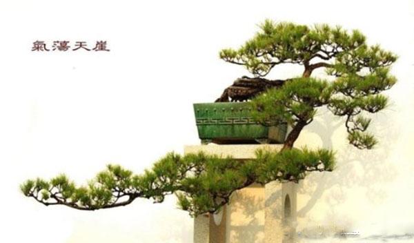 bonsai-dang-huyen-3a