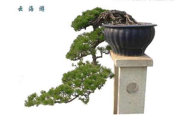 Cây bonsai dáng huyền – Dáng bonsai nghệ thuật được ưa chuộng