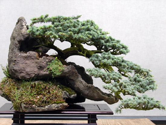 bonsai-dang-huyen-8a