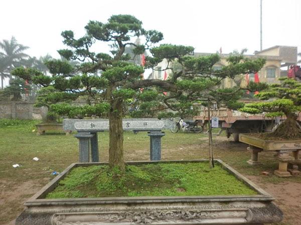 tung-la-han-6a