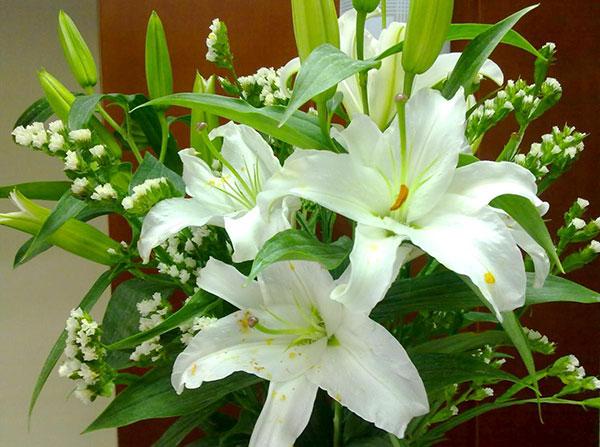 Hoa huệ – Hoa đẹp được sử dụng để trưng bày ngày lễ tết
