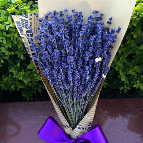 Cây hoa oải hương – cách trồng và chăm sóc cây hoa oải hương
