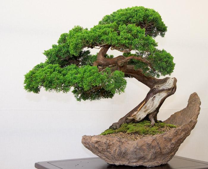 Cây si – Cách trồng và chăm sóc cây si hiệu quả cao