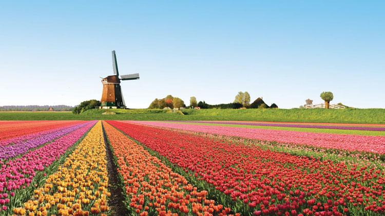 le-hoi-hoa-tulip-ha-lan