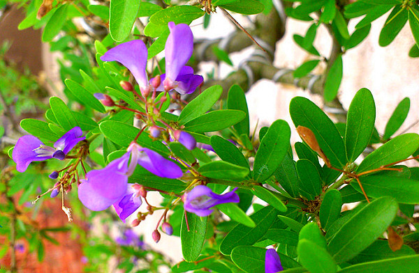 Cây có hoa màu tím khá đẹp