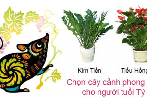 chon-cay-canh-phong-thuy-cho-nguoi-tuoi-ty