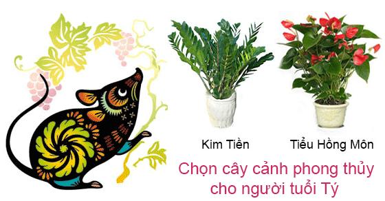 chon-cay-canh-phong-thuy-cho-nguoi-tuoi-ty