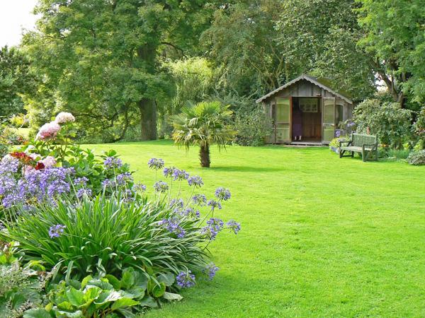 cỏ lá gừng là loại cây xanh công trình đẹp mắt