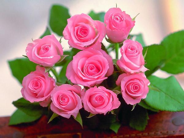 ý nghĩa hoa hồng phớt