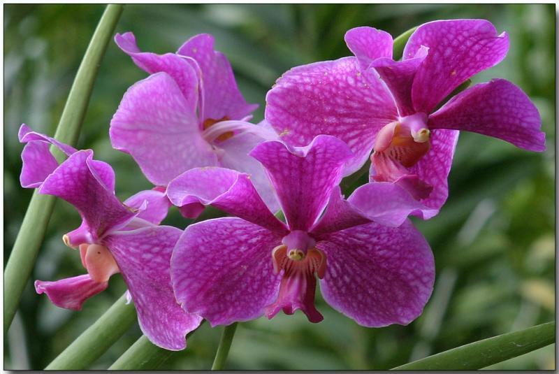 Hoa lan Vanda – Cách trồng và chăm sóc cây hoa lan Vanda