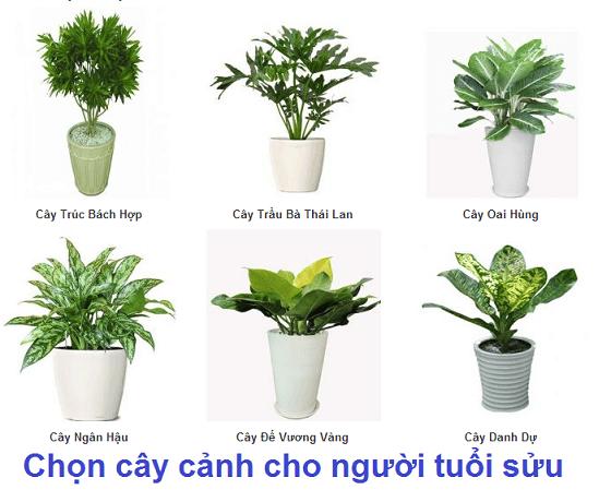 chon-cay-canh-cho-nguoi-tuoi-suu