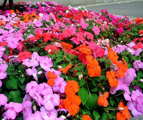 Hoa đẹp trồng để ra hoa quanh năm
