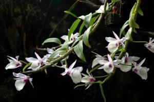 Cách trồng và chăm sóc hoa lan hạc vỹ