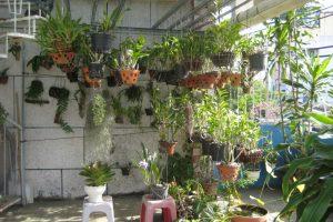 Chú ý đến việc thiết kế vườn trồng lan