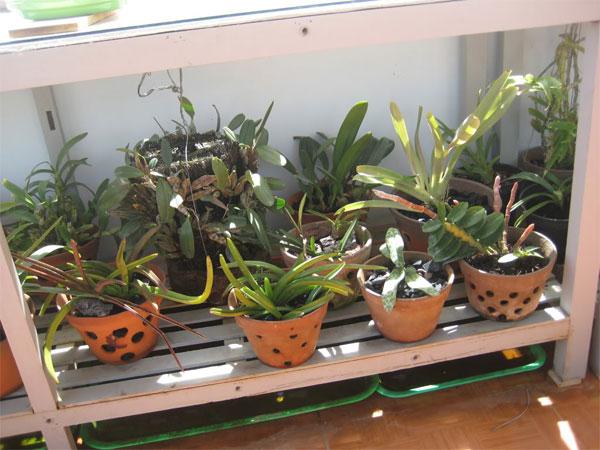 Kĩ thuật trồng lan nói chung