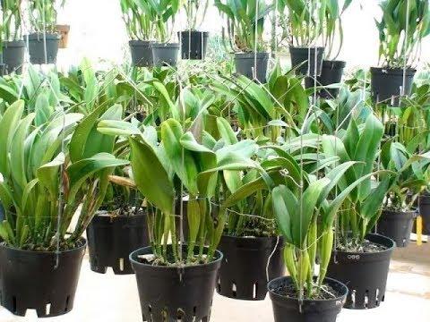 Kĩ thuật trồng