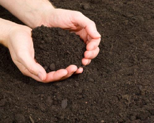 Tiêu chuẩn chọn đất và mật độ trồng