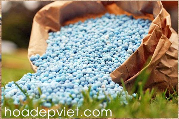 cách chăm bón cây hoa hòe