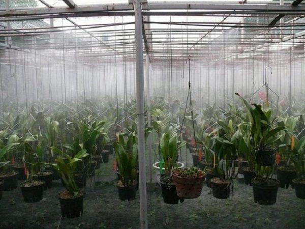 chế độ tưới nước dạng phun sương