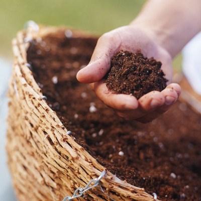 phân hữu cơ cho lan chu đinh