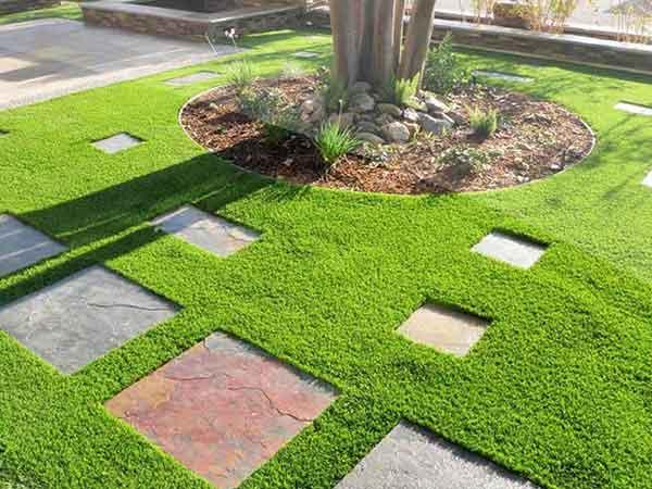 Cây cỏ nhung nhật – Cây trồng cảnh quan sân vườn tuyệt vời