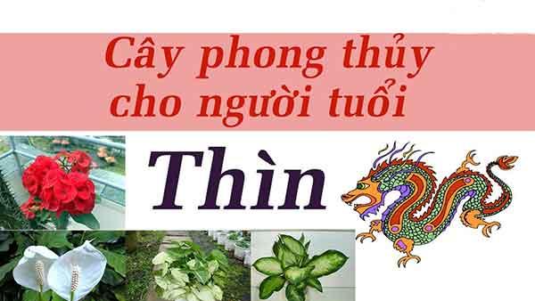 cay-phong-thuy-cho-tuoi-thin-1a