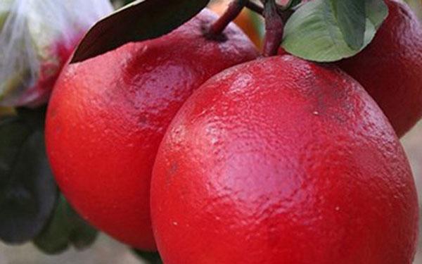 Cây bưởi đỏ luận văn – Cách trồng và chăm sóc cây bưởi đỏ luận văn